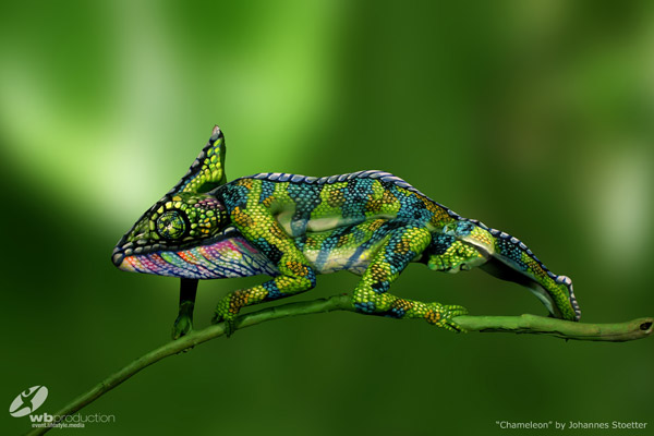 "Artist Johannes Stötter presents ""THE CHAMELEON"