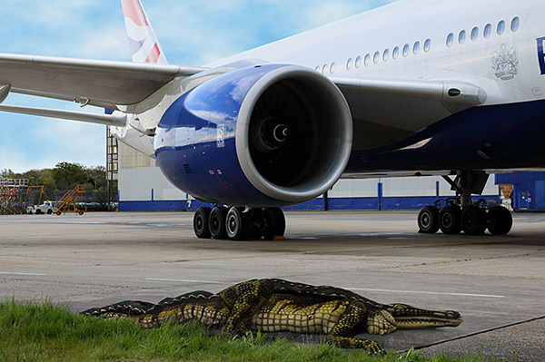An Alligator on Gatwick Airport in London