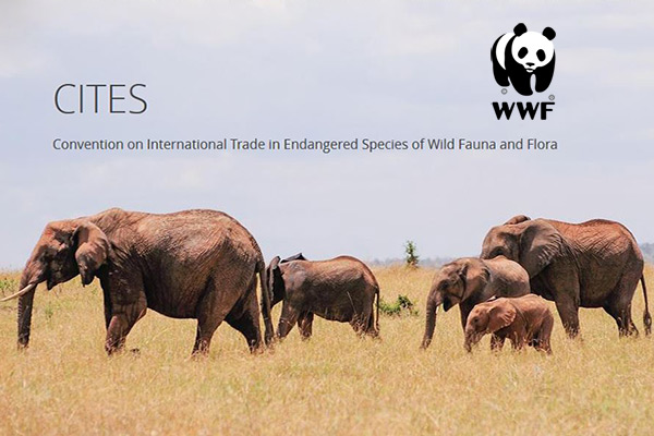 Proud to be working with WWF at CITES