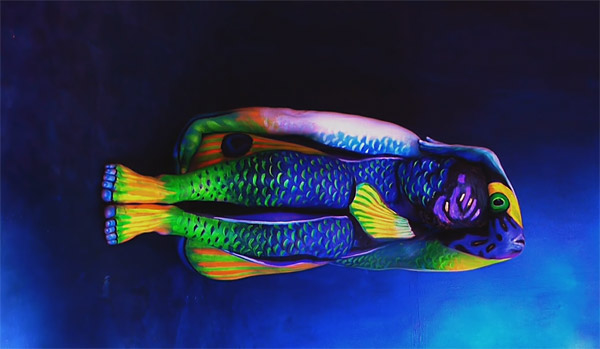 Angelfish - an extraordinary piece of art